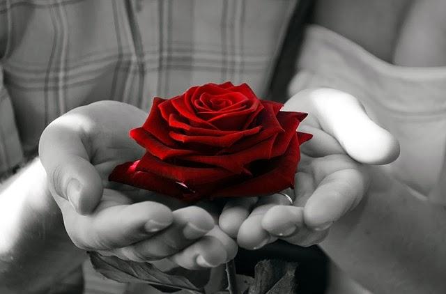 Risultati immagini per rosa rossa immagini