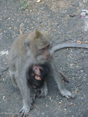 Ubud Monkey Forest Bali Photo 14