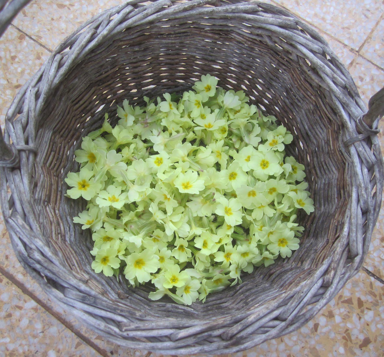 Primrose harvest