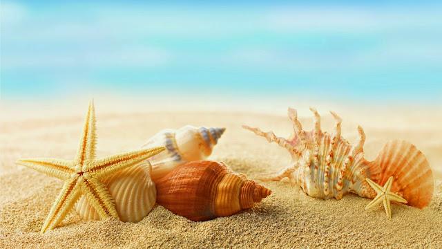 Estrellas de Mar y Caracoles en verano