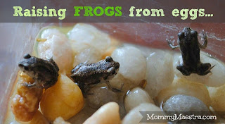raising frogs from eggs