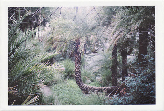 dirty photos - on the island of - photo of palm tree with bended body