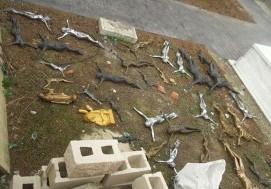 Rumanos robando en cementerios