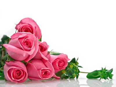 Rose Day 2016 HD Photos Wallpapers Free Download