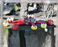 decoratiune ratoni zoo braila