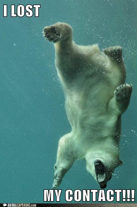 view polar bear funny pictures daily news