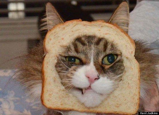 gatos pão