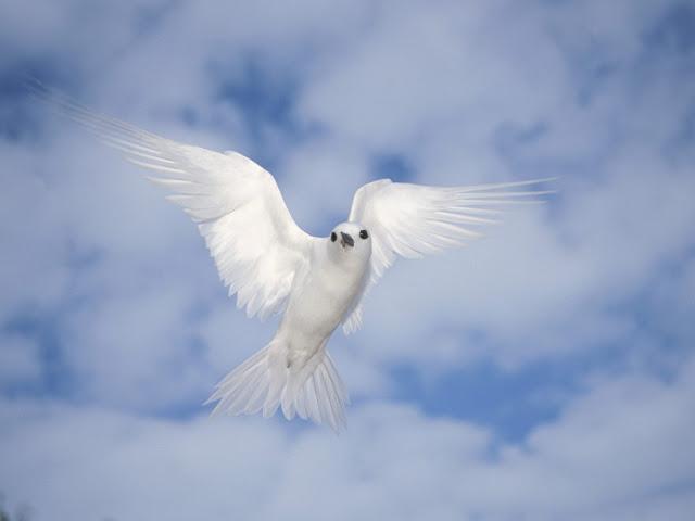 Lovely White Bird Wallpaper
