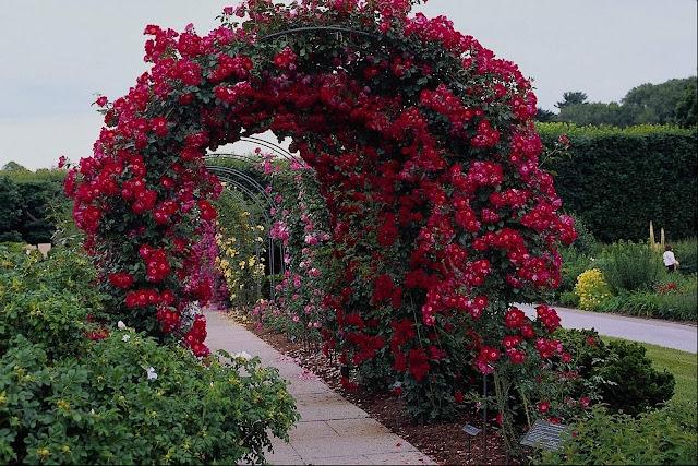 நான் பார்த்து ரசித்த புகைப்படங்கள் சில.... Beautiful+Flower+Garden+Wallpapers+%252812%2529