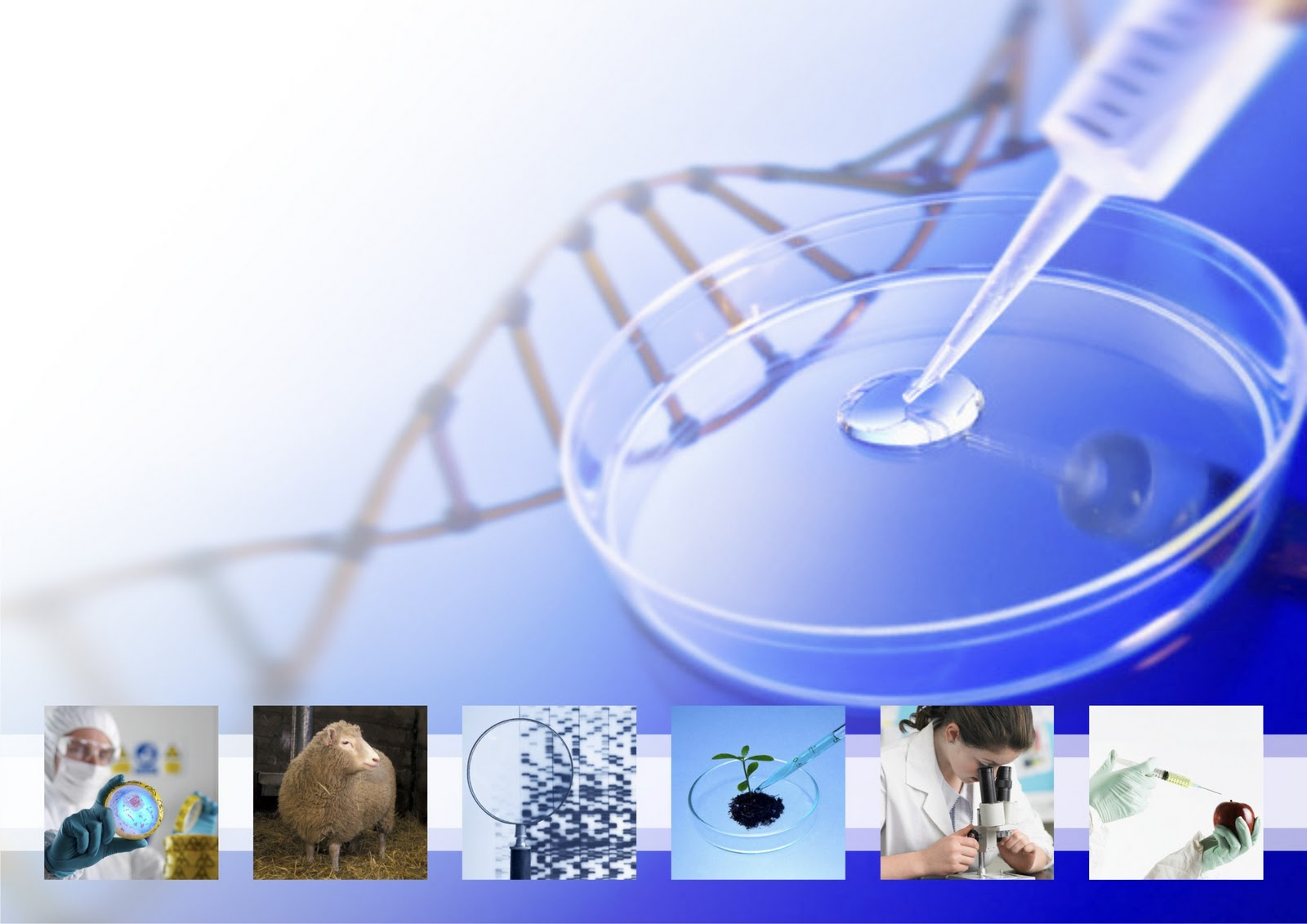 Laboratorio biologia molecular