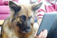 dog e-reading