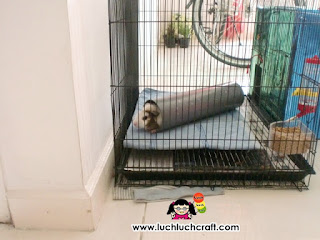 cute guinea pig house