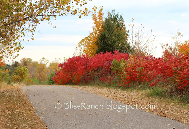 Fall at Bliss Ranch