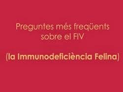 La Immunodeficiència Felina (FIV)