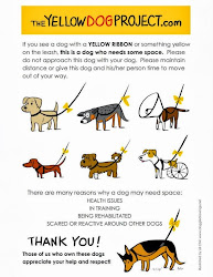 Please Do Not APPROACH dogs with yellow ribbons!!!