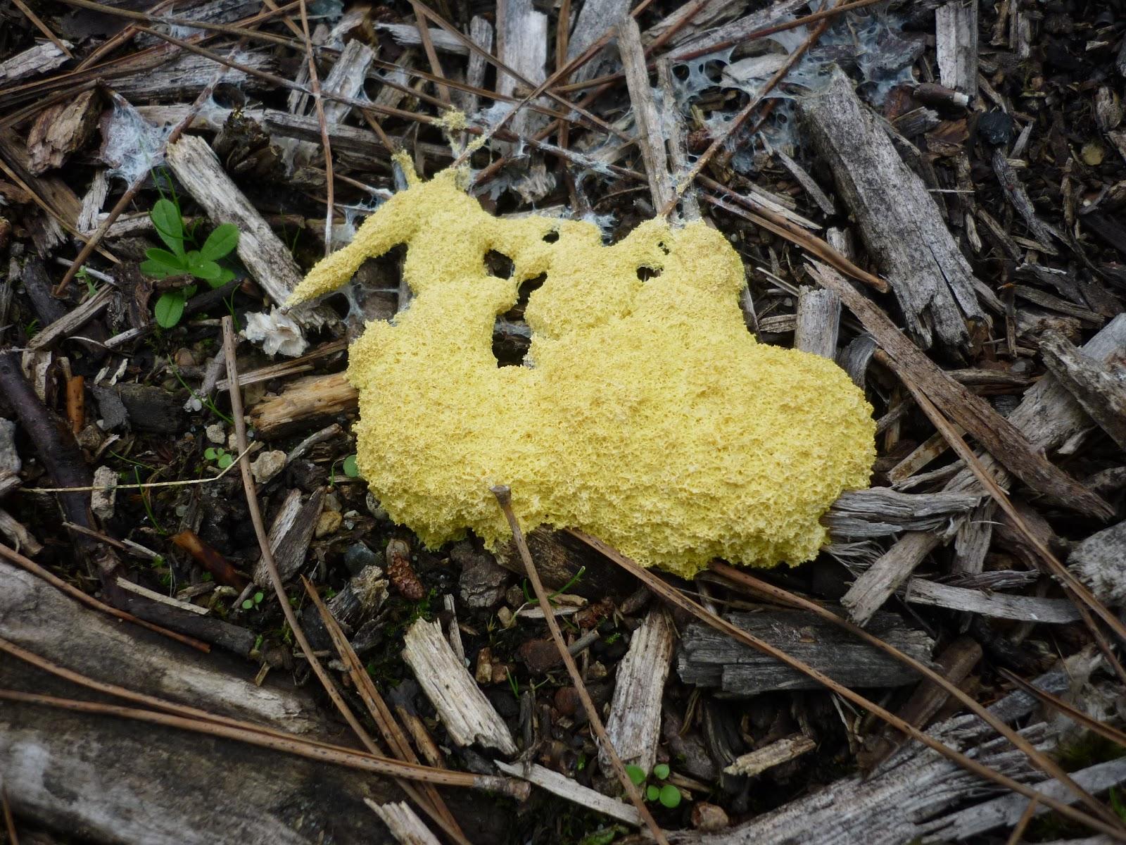 Montessori avec les 6 12 ans amanites land une sortie champignons pr s de chez nous - Comment nettoyer des champignons des bois ...