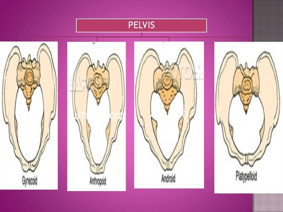 Types Of Pelvis