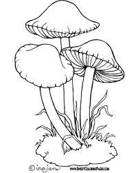 Jamur, Payung, Jamur payung, jamur tiram, jamur champignon, budidaya janur
