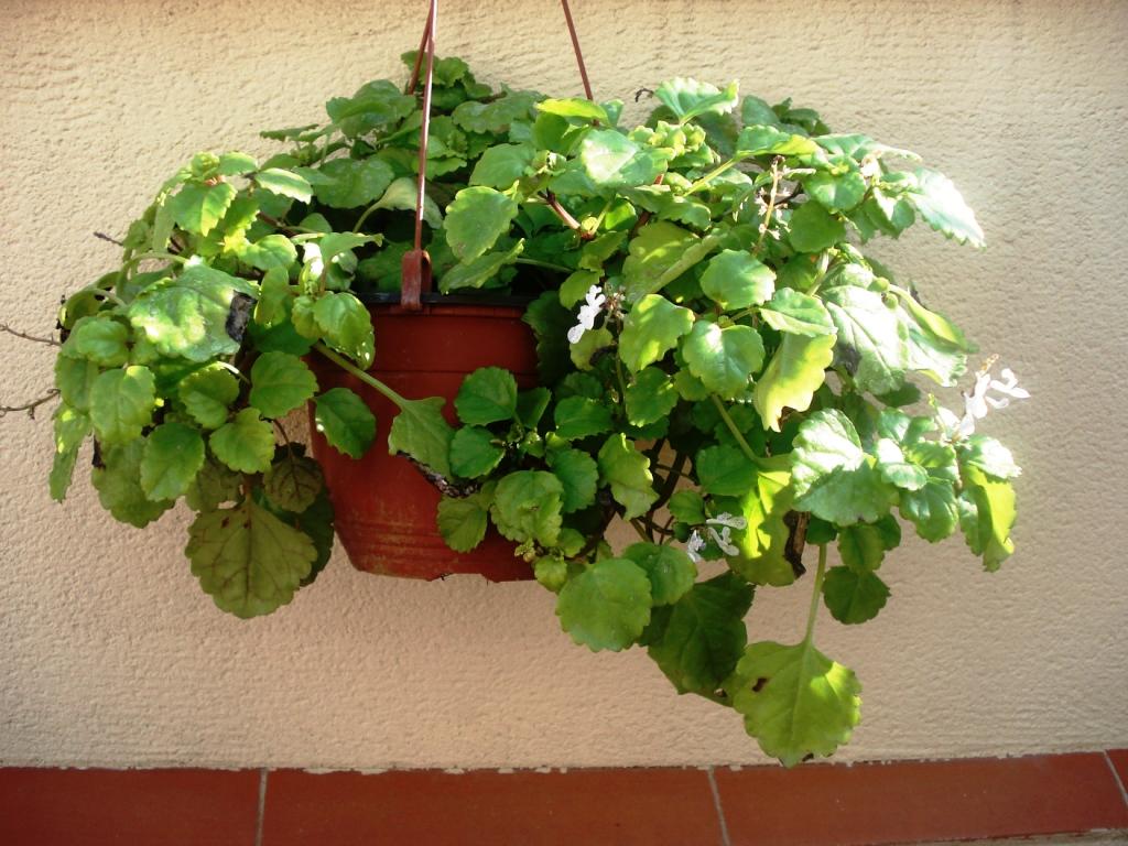 Cooperativa besana regalamos plantas - Fotos plantas de interior ...
