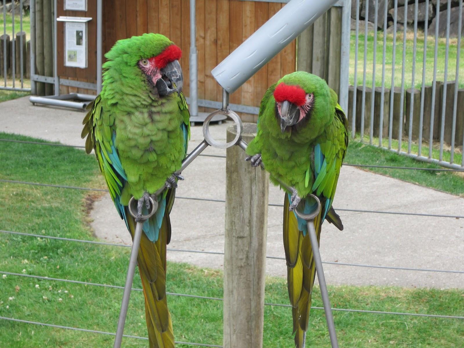 Where's The Open Bar...? Parrots+1