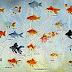 Varian Ikan Mas Hias Paling Populer