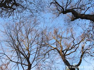 La luce del cielo invernale accompagna il tempo delle riflessioni