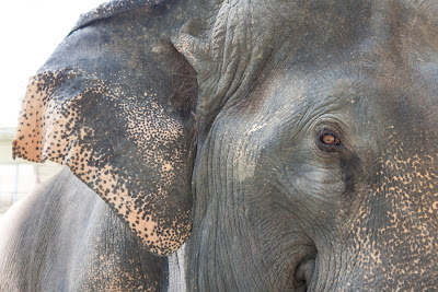 Zoo Chiang Mai