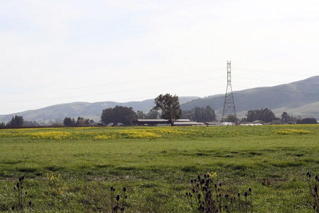fields wildflowers sonoma california