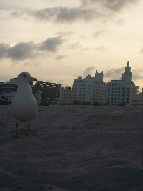 Proud,Seagull,sunset