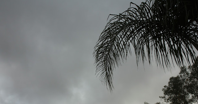 wet, rain, cloud, palm, plant, tree, photograph, artist, art, S. Myers, Sarah Myers, gray
