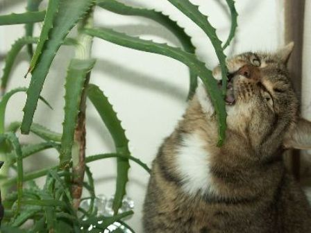 Dangerous Plants For Cats And Dogs
