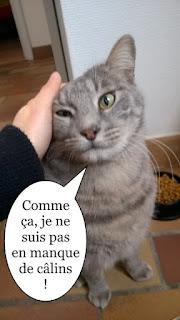 Mimigris, chat tout gris.