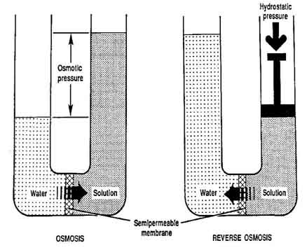 the process of osmosis and its - through the process of osmosis, nutrients get transported to cells and waste materials get moved out of them - the pressure within and outside each cell is maintained by osmosis as this process ensures a balance of fluid volume on both sides of the cell wall if fluid volume within a cell is more.