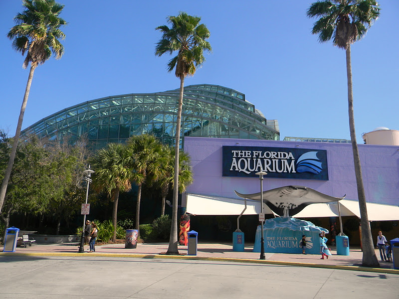 Come see why The Florida Aquarium is one of the top aquariums in the country! Experience sharks, alligators, penguins and much more! Immerse yourself in interactive programs like Dive with the Sharks, Shark Swim and Swim with the Fishes or take a Wild Dolphin Tour on board the Bay Spirit II, a foot powered kolibri.mlon: Channelside Dr, Tampa, , FL.