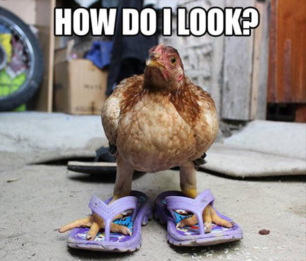 Funny chicken memes - photo#16