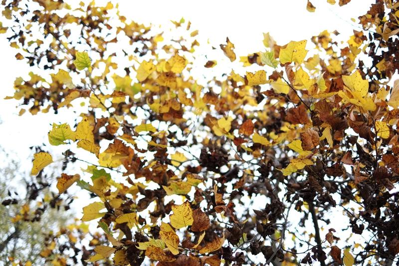 Foglie gialle e marroni in autunno
