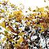 Luci e colori dell'autunno, esercizio nr. 2