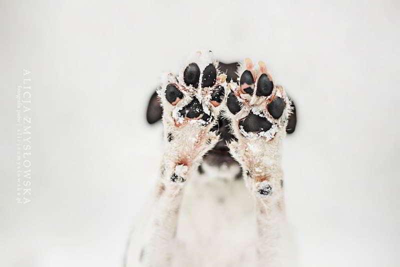 dog-photography-alicja-zmyslowska-07