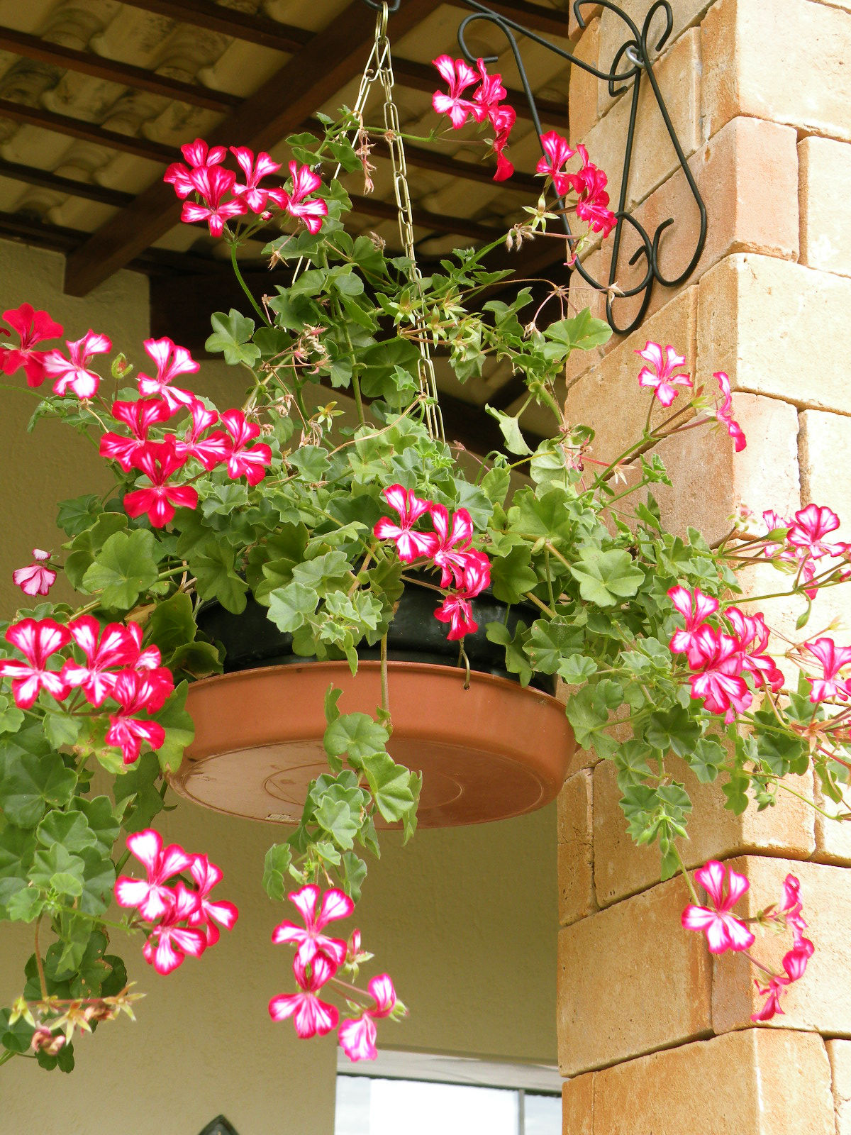 jardim quintal plantas ? Doitri.com