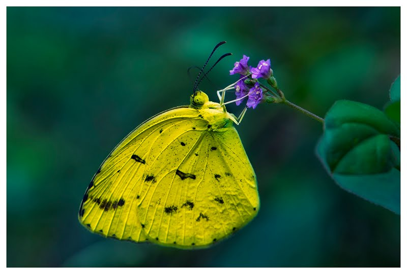 butterfly@kerala