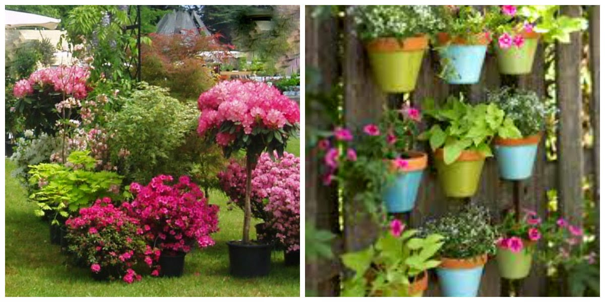 Dise a tu vida plantas para patios peque os for Decoracion de patios pequenos con plantas
