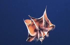 5 Makhluk Aneh Dari Dasar Laut Yang Mungkin Belum Pernah Kamu Dengar Sebelumnya