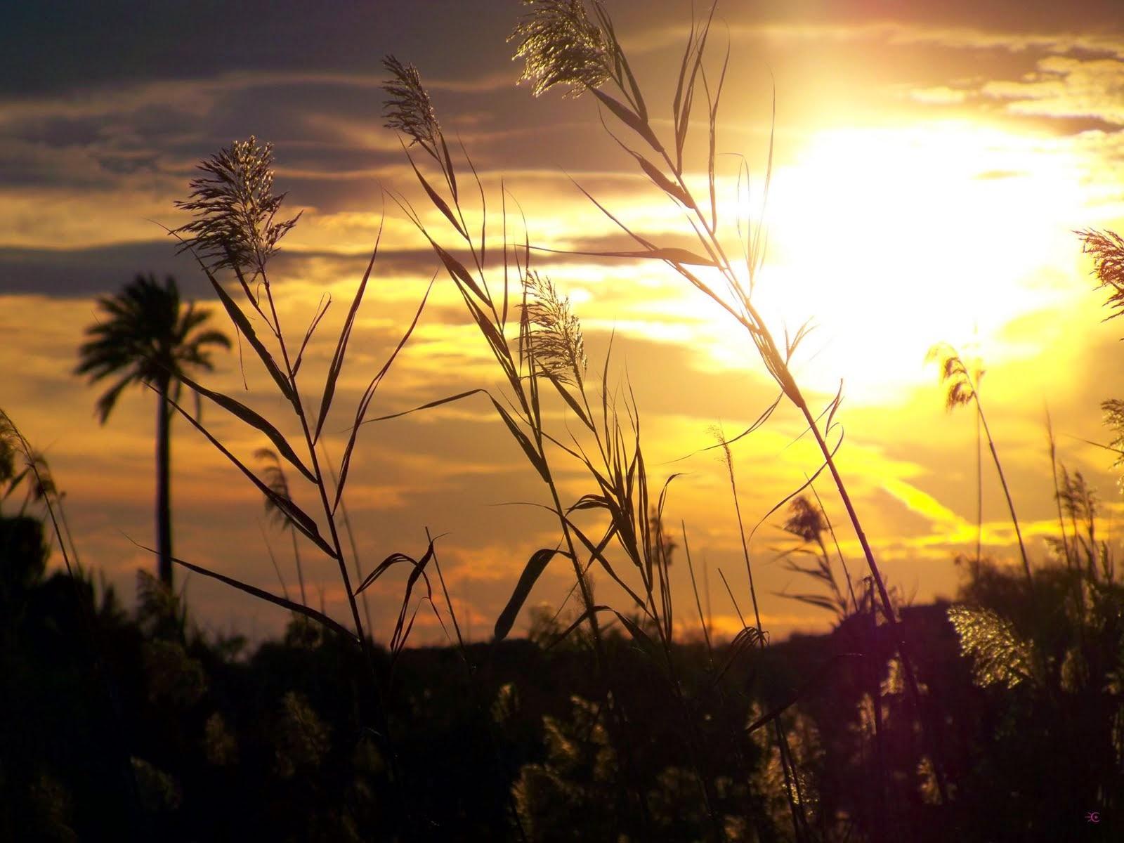 Sol de verano...