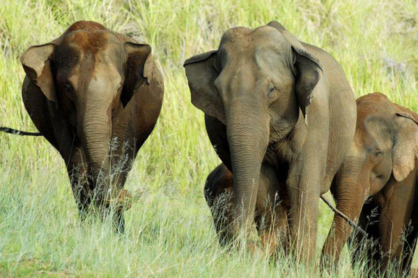 Elephants at Periyar National Park