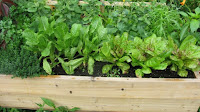 greens in Container Gardening