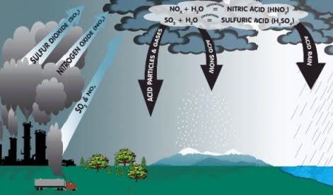 Facts on Acid Rain! at EssayPedia.com