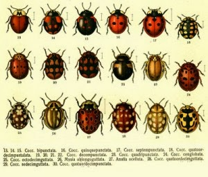 how to get ladybugs out of your house