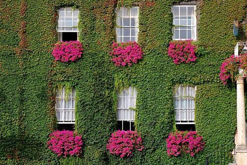 Im genes de jardines verticales con trepadoras jardines - Imagenes de jardines exoticos ...