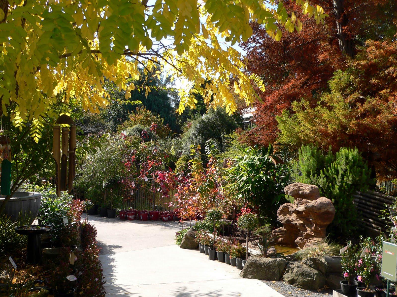 Melbourne photographs victoria tasmania queensland for Garden pond melbourne
