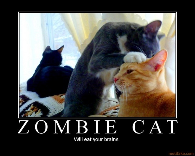 zombie-cat-cat-kitty-kitten-brains-demot